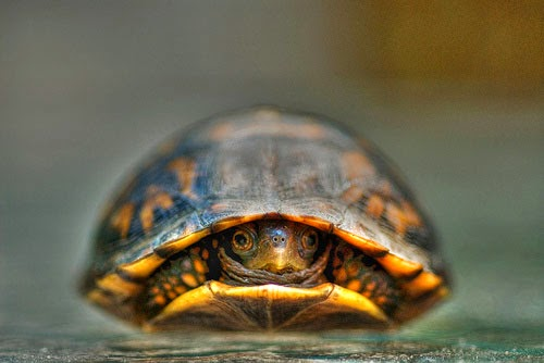 8-hiding-turtle.jpg